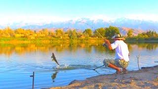 МОНСТРЫ ИЗ ЗАБРОШЕННОГО ОЗЕРА Рыбалка на Реке и заброшенном Озере Судак Сазан и стаи Карася