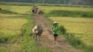 Phong Nha Farmstay, Vietnam  - Part II