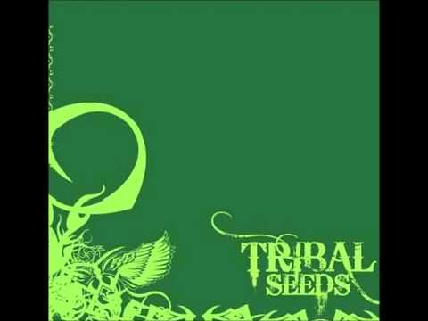 Tribal Seeds - Dark Angel
