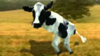 Retarded Running Cow