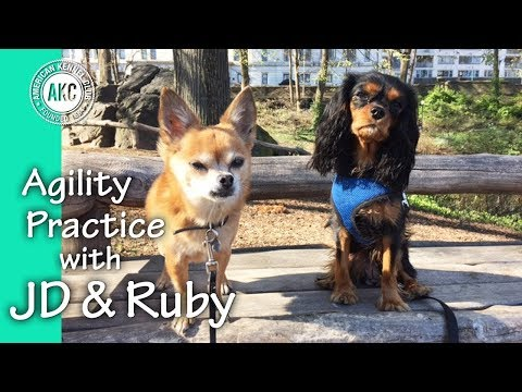 Agility Practice with JD & Ruby