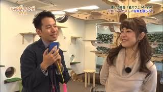 J:COMチャンネルで放送中の「ちば6ROCK!」でご紹介された 猫カフェMyao...