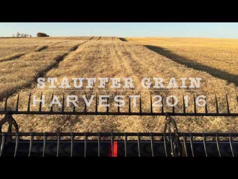 Wheat Harvest 2016 - Alberta, Canada