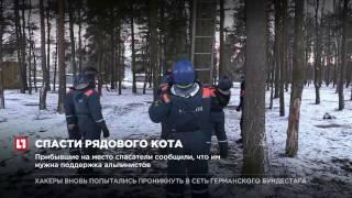 Сотрудники МЧС Петербурга организовали операцию по снятию кота с дерева