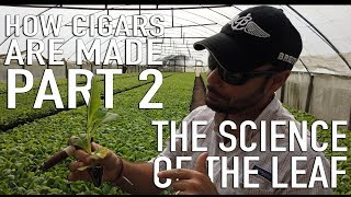 How Cigars Are Made Part 2 | The Science of The Leaf