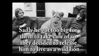 Животные умеют любить...