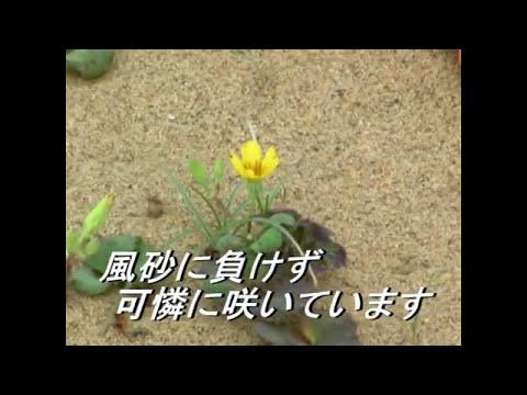 鳥取砂丘 春夏秋冬【バイオリン演奏:竹田詩織】