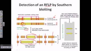 Southern blotting applications