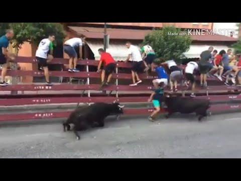 ¡Se salvó de milagro! Escalofriante cogida de dos vacas a un joven durante un encierro