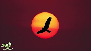 Download Peder B. Helland - The Eagle (Official Audio) Mp3 and Videos