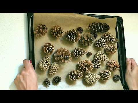 DIY Pine Cones Decor   Cleaning & Preparing Pine Cones