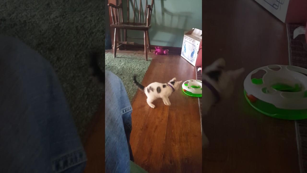 Scared Kitten Jumping Everywhere - YouTube
