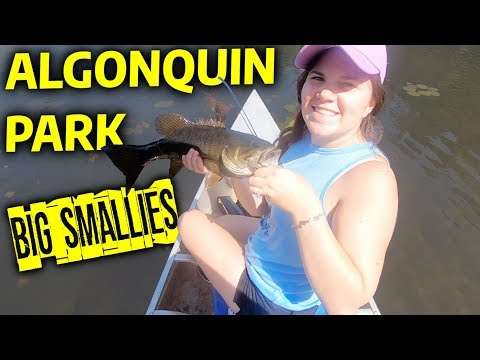 Smallmouth Bass Fishing In Algonquin Park On Lake Of Two Rivers & Mew Lake