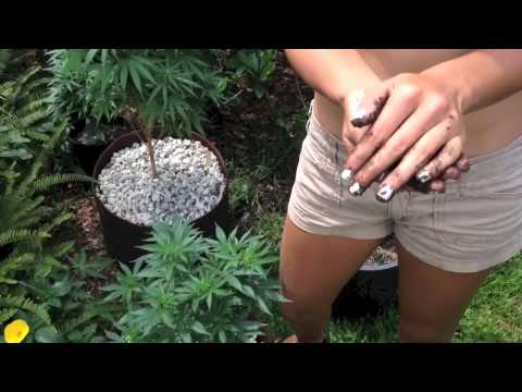 Free & easy way to add fertilizer & aeration to potted pot plants
