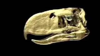 Animation of Terror Bird Bite