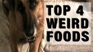 German Shepherd: Top 4 Weird Foods Awesome Dogs Eat, Demonstrated By German Shepherds