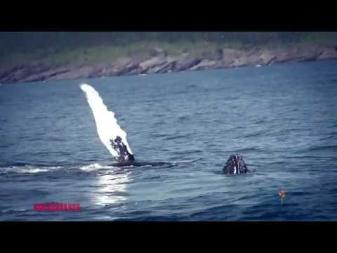 Whale Watching In Canada With Globus