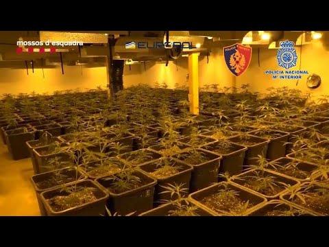 Más de 100 detenidos en España en una macrooperación contra el tráfico de drogas