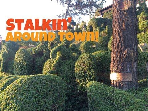 Stalkin' Around Town!
