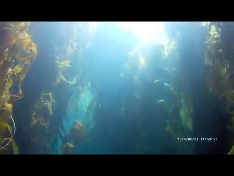 Aquanautics Dive: Anacapa in August