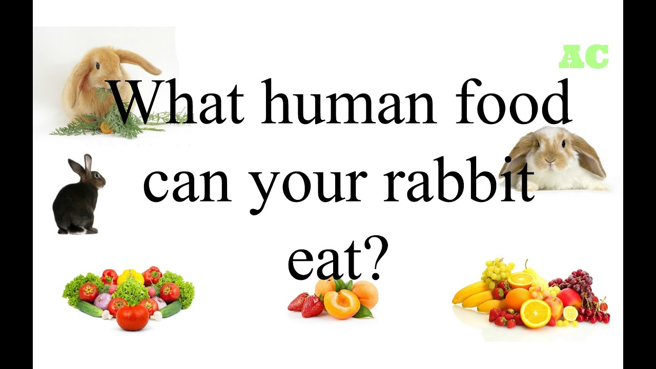 What Human Food Can Bunnies Eat