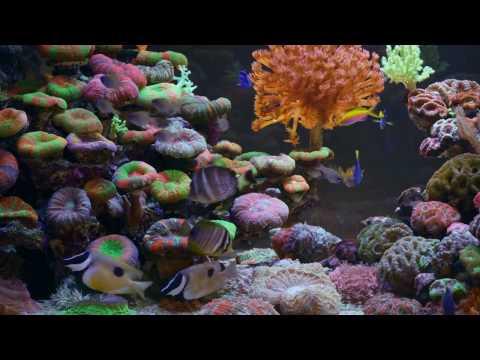 Непоседы - А рыбы в море плавают вот так (караоке)