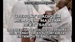 Tehillim (Psalms) in Ivrit (Hebrew)