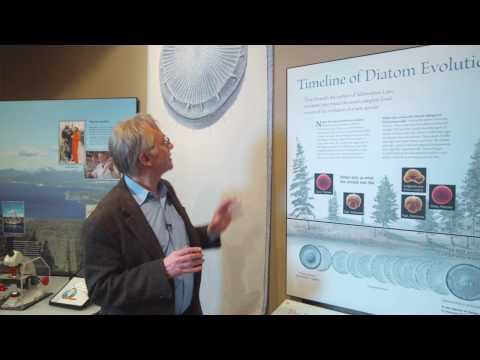 Richard Dawkins: Diatoms: The Evolution of a New Species - N
