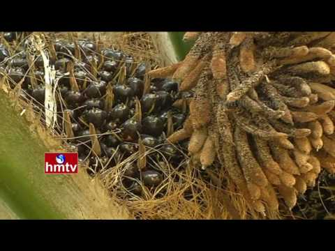 Oil Palm Farming Tips | Ideal Farmer Shekhar | Khammam Dist | Nela Talli | Weekend Special | HMTV