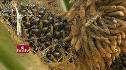 Oil Palm Farming Tips | Ideal Farmer Shekhar | Khammam Dist | Nela Talli | Weekend Special | HMTV
