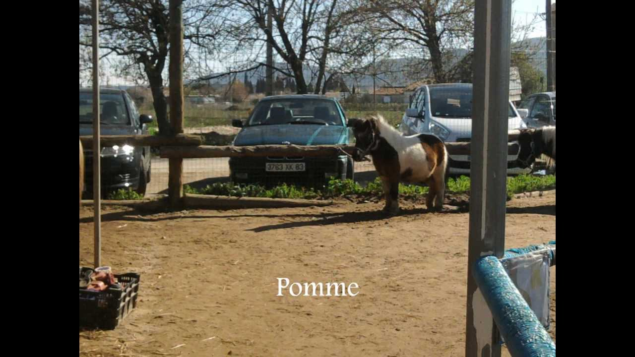 poney ranch la crau