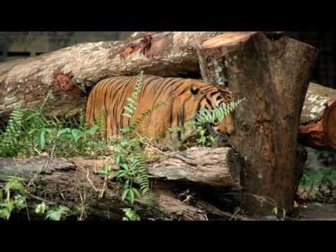 The National Zoo, Malaysia