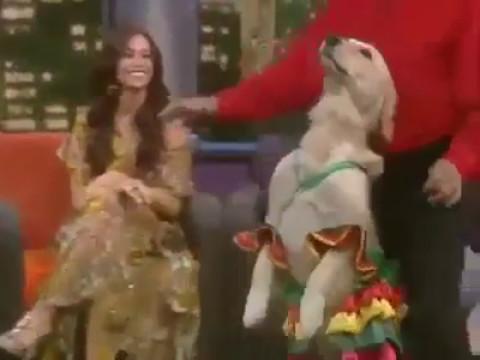 Собака танцует с хозяином