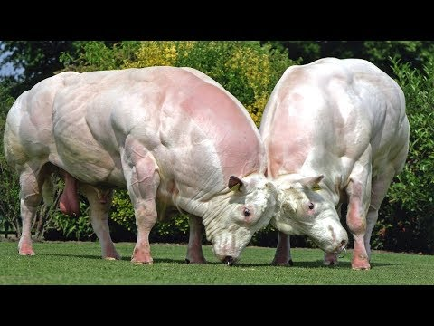 दुनिया के 5 सबसे खतरनाक चौकानेवाले जानवर 5 Most genetically modified animals created by science Mp3