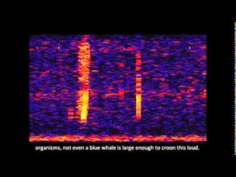 The Bloop el sonido abisal mas misterioso del oceano