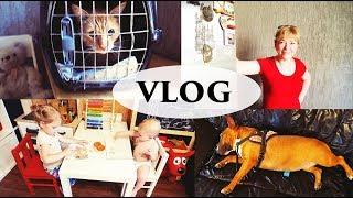2 собаки, кот и ТЁЩА - Senya Miro