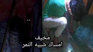 امساك الوشق في محافضة ميسان  شبيه النمر العربي مخيف