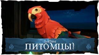 Sea of Thieves: Питомцы! Новое обновление в игре!