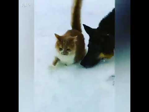 Собака и кошка друзья😂😂😂😂 - YouTube