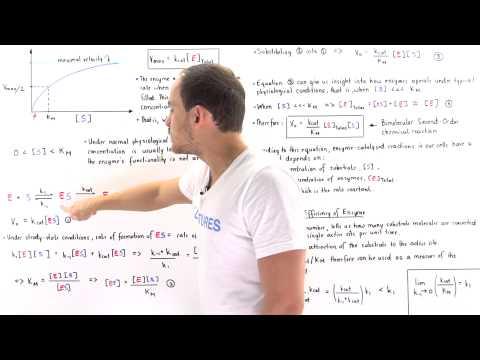 Catalytic Efficiency of Enzymes (kcat/Km)