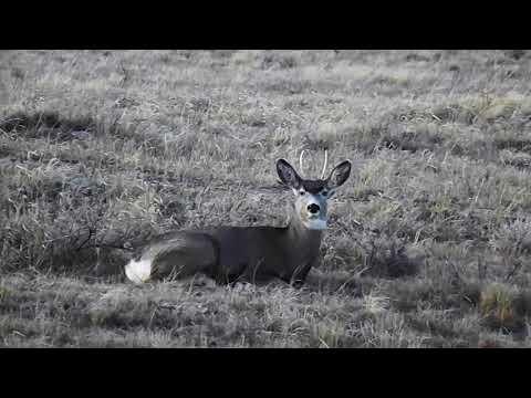 North Dakota Deer Hunt
