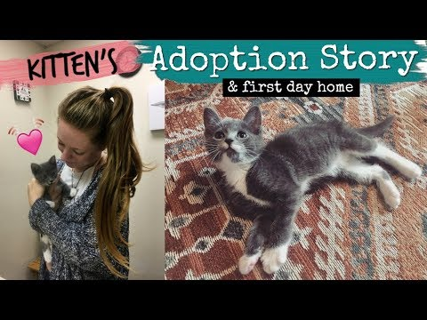 Our Kitten's Adoption Story & First Day Home (so cute)