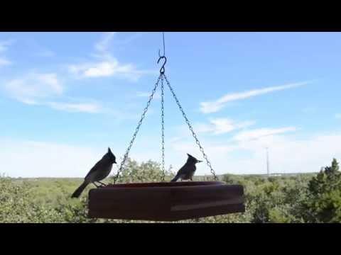 Central Texas Winter Birds