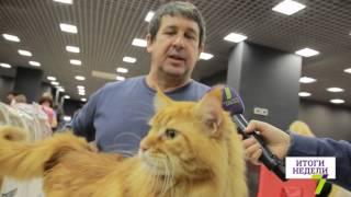 В Одессе открылась выставка кошек