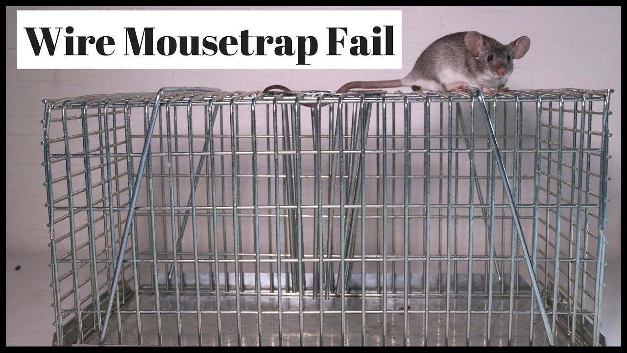 wire-cage-mousetrap-fail-good-design-with-one-major-flaw-mousetrap-monday
