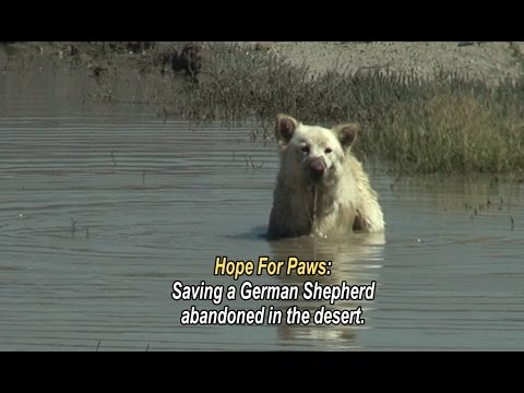 Hope For Paws: saving a German Shepherd abandoned in the desert.  Please share this unusual rescue.