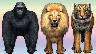 Learn wild animals finger family song for kids | nursery rhymes,Gorilla,children,Bear,NASH TOON Tv