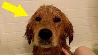 Dieser Hund stand alleine im Regen, dann kontrollierten sie sein Fell – Schock!!!