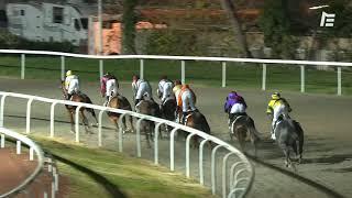 Vidéo de la course PMU PRIX DES CRIQUES