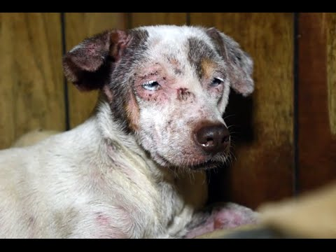 Animals rescued from cruelty in Arkansas